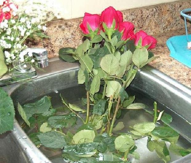 Оптимальные условия хранения срезанных роз